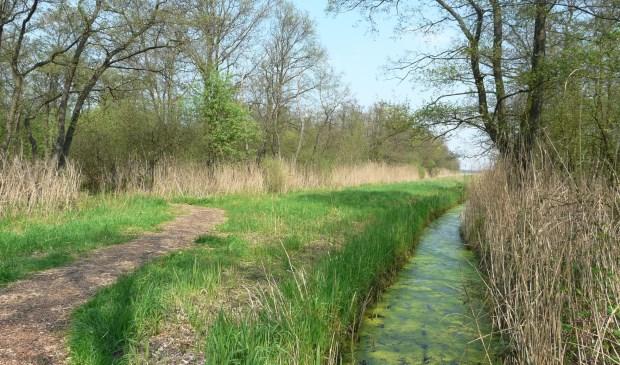Via het Bert Bospad naar de Westbroekse zodden waar IVN afdeling De Bilt regelmatig wandelingen verzorgt. (foto IVN De Bilt)  © De Vierklank