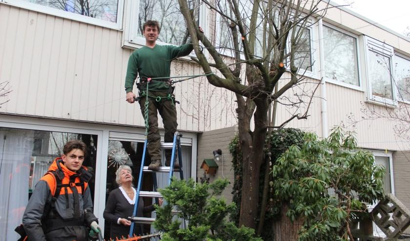 Donderdag 20 december ging het Hoveniersbedrijfsbedrijf in de tuin aan de slag in Utrecht. Ondanks het vele beton in die woonwijk koestert mevrouw het groen in haar tuin; alleen is ze nu niet meer in staat de grote struiken en bomen de snoeien.