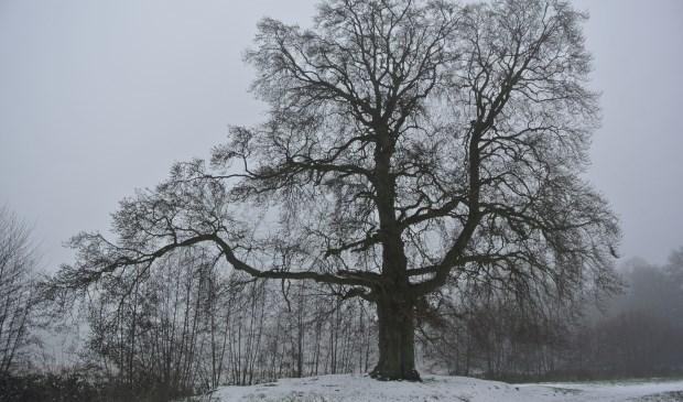 Frans Poot bracht ook nog een bezoek aan het Houdringe bos en ervoer een geweldige serene rust.