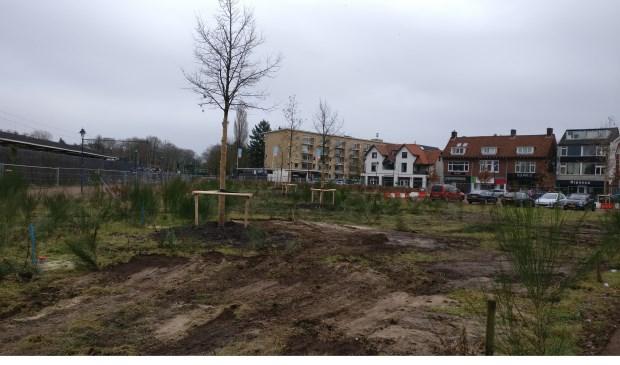 Halverwege december 2017 verhuisden Kwinkelierbomen alvast naar de Driehoek.