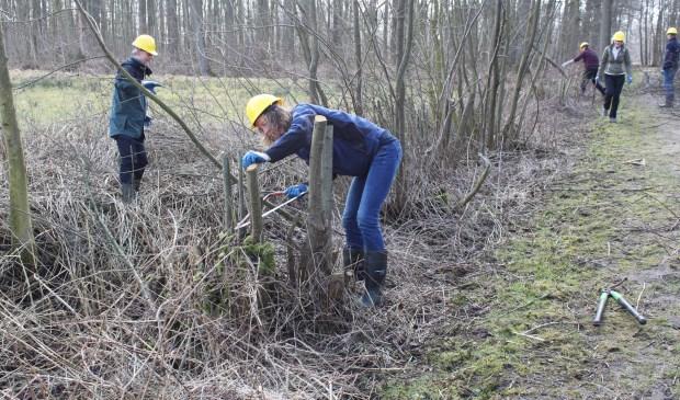 In de al aanwezige houtige landschapselementen worden minder geschikte elementen verwijderd; daar komt bijenvriendelijk groen voor in de plaats.