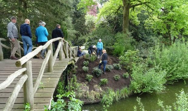 Onder toeziend oog van bestuur en burgemeester zijn vrijwilligers zijn druk bezig met de aanplant van rododendrons bij de bruggetje.