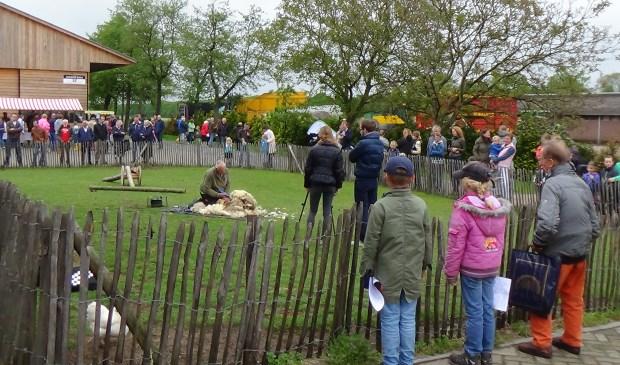 Demonstratie schaapscheren tijdens de lentemarkt.
