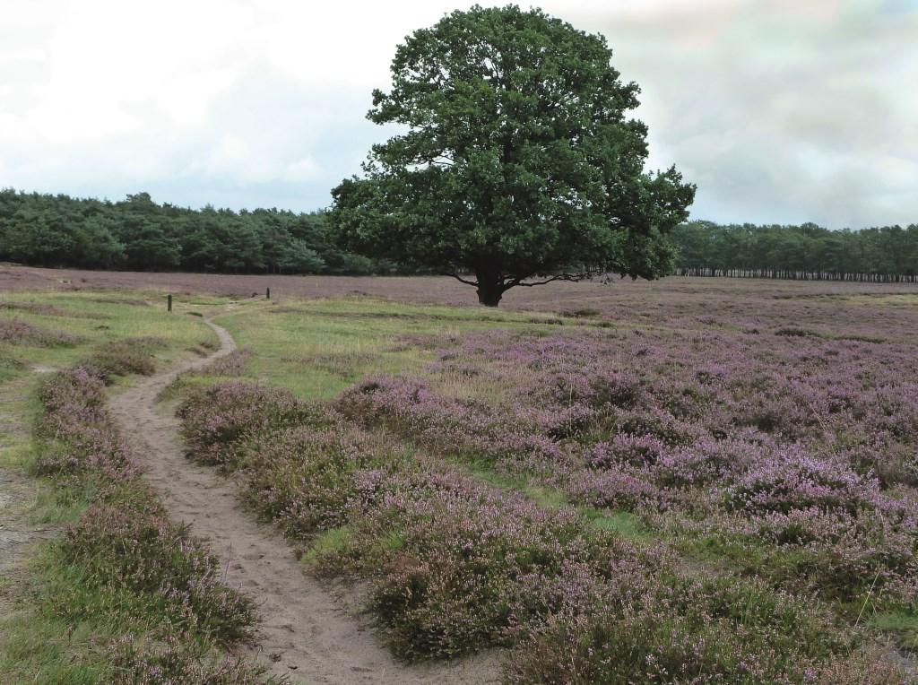 De Hoorneboegse hei is uitgangspunt van de natuurverbinding tussen oost- en westkant van de A27.  © De Vierklank