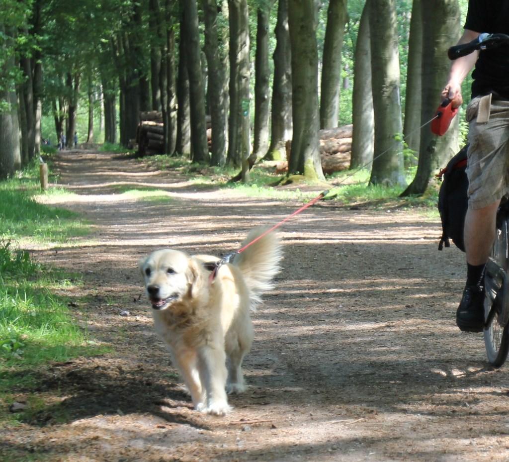 Hond naast de fiets is in België verboden. Foto: Reyn Schuurman © De Vierklank