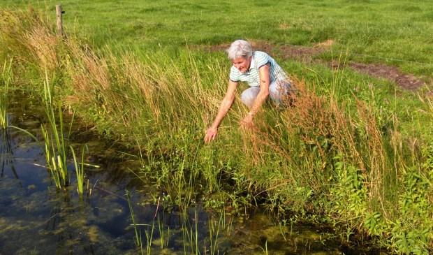 Bertien Collette in 2008: 'De sloten zijn verbreed en hebben aflopende oevers gekregen en staan mede dankzij agrarisch natuurbeheer, vol met allerlei bloemen, een lust voor het oog'.  © De Vierklank