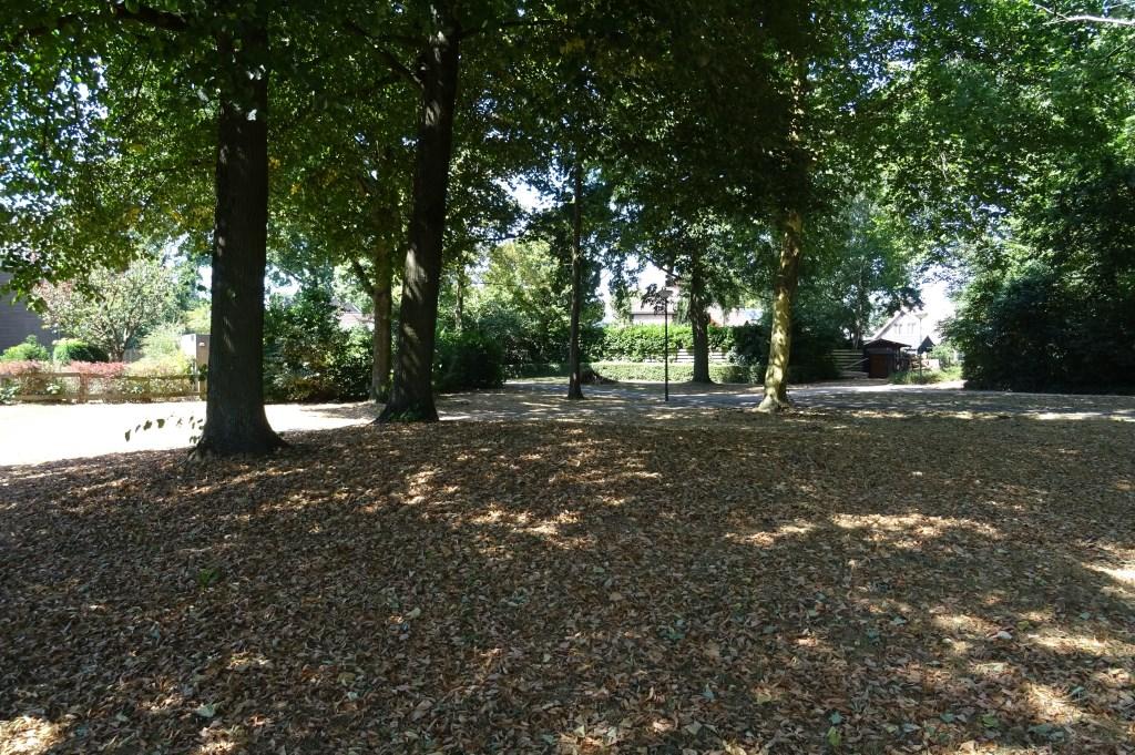 Een tapijt van verdorde bladeren onder de Lindebomen.
