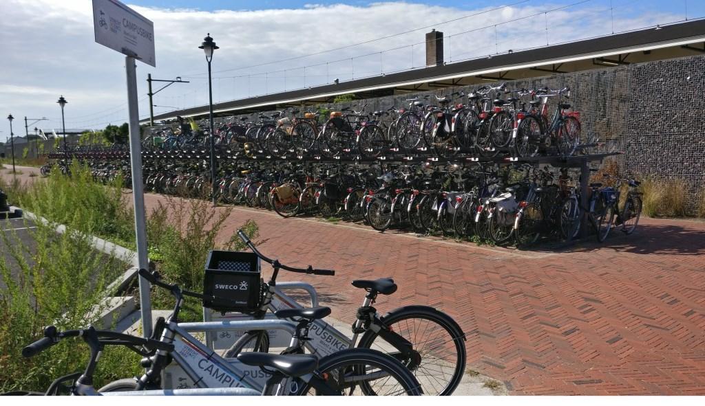 Ook bij station Bilthoven staan de Campus bikes separaat van de overige fietsen.  © De Vierklank
