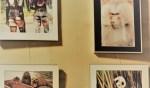 Wilde tentoonstelling Fotoclub