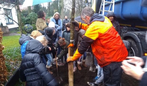 De Quercus robur (of te wel Eik) is geplant.[foto Reyn Schuurman].
