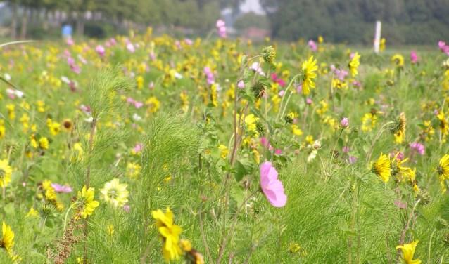 Planten In Tuin : Lezing over wilde planten in de tuin bij tuinclub altena heusden