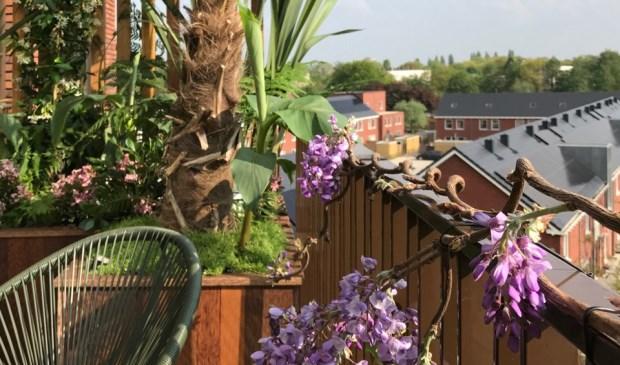 Kokoshout van papendrechtse onderneming te zien in eigen for Huis te koop van eigen huis en tuin