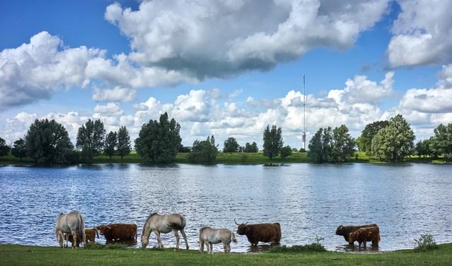 Fjorden paarden en Schotse Hooglanders bij de Put