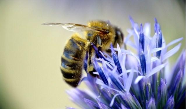 • Bloeiende planten zijn belangrijk voor onder andere bijen en hommels.