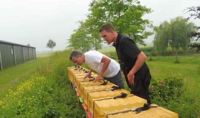 Bas de Peuter controleert de bijenkasten op zijn bedrijf, rechts Michel van der Werff.