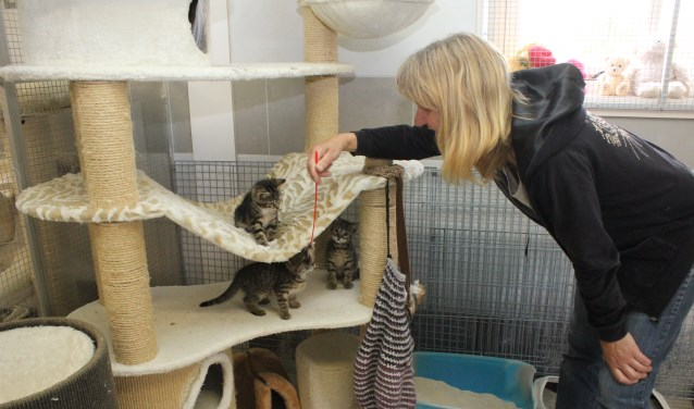 • Miranda Heydra bij drie van de vele kittens in de opvang.