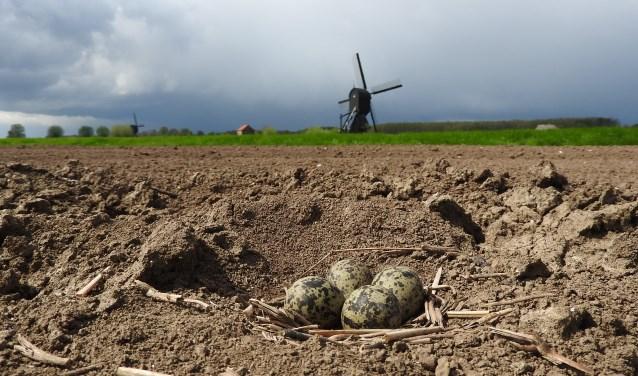 Weidevogels hebben de bescherming van hun nesten hard nodig.