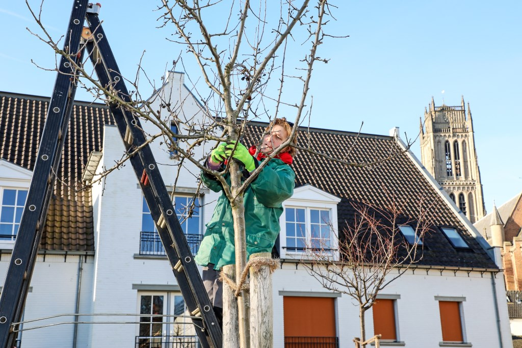 Boomsnoeifeest TorenTuin Foto: Lya Cattel © Bommelerwaard