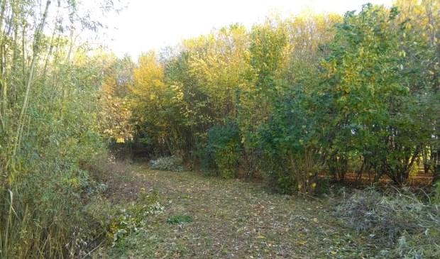 • Het bos is er al, nu de rest van het landgoed nog.