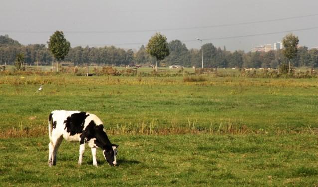 • Polder tussen Krimpen aan den IJssel en Krimpen aan de Lek.