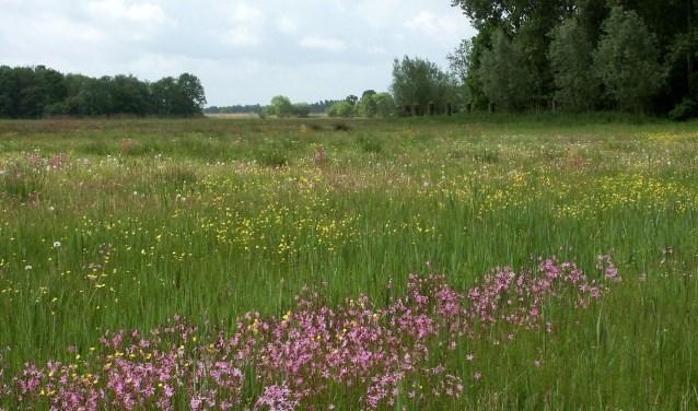 • Kruidenrijk grasland.