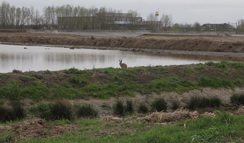 • Bij het grondverzet zijn volgens het waterschap schadelijke stoffen in het oppervlaktewater terechtgekomen.