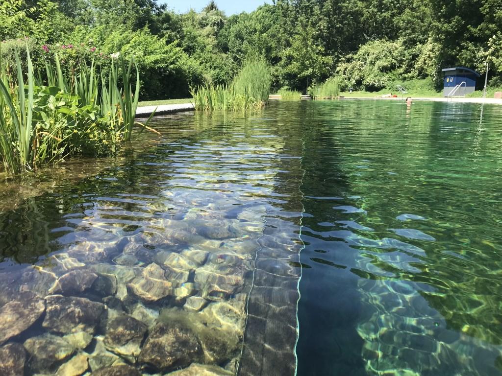 • De badrand van een natuurgezuiverd zwembad.  © Krimpenerwaard