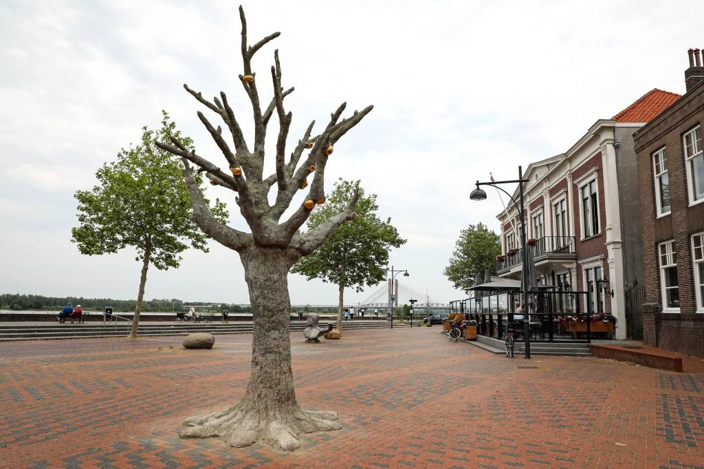 • Op de Waalkade staat tijdelijk deze betonnen boom, gemaakt door Joris Baudoin. Foto: Lya Cattel © Bommelerwaard