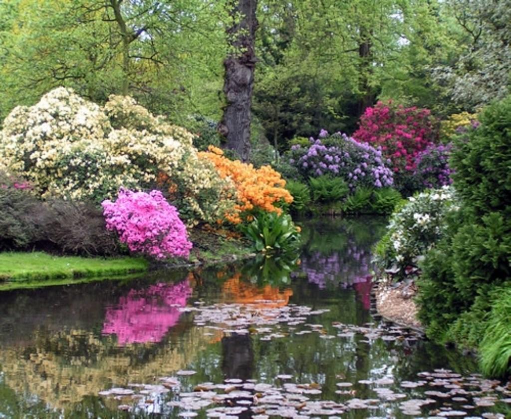 • Het is het zeker waard een bezoek aan de Arboretum Trompenburg te brengen. Foto: Marc de Ruijter © Klaroen