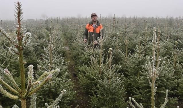 Kerstbomen Kweken Dat Doen We Met Zijn Allen Demooisonenbreugelkrant