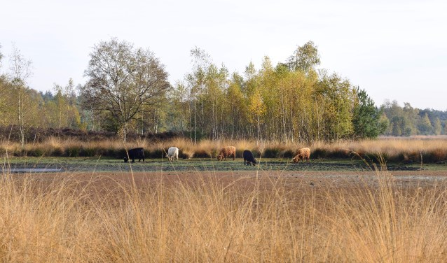 Het Oud meer in Son en Breugel   | Fotonummer: c2a629