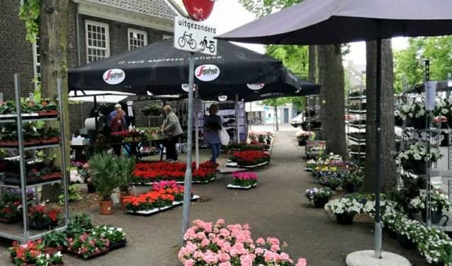 Geraniummarkt  | Fotonummer: 2d9129