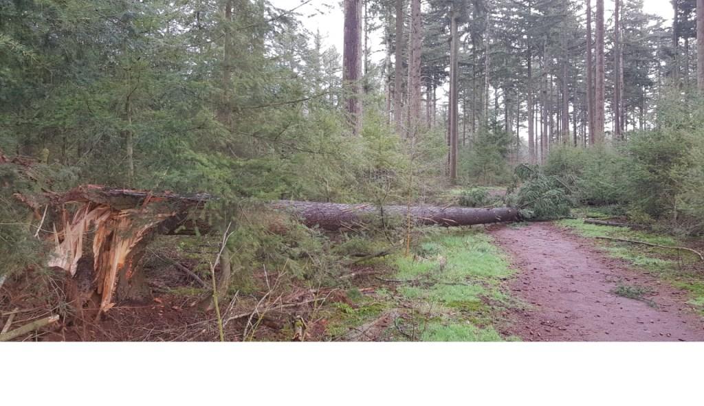 Stormschade in de bossen Foto: Staatsbosbeheer © DeMooiSonenBreugelKrant