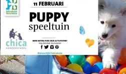 Op zondag 11 februari is ChiCa Hondenschool aanwezig op de dierenafdeling van Intratuin. Foto: PR