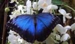 Vlinderseizoen geopend!