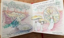 Foto: Schetsboekje van Sonja van der Burg met aantekeningen over gezamenlijke waarnemingen met Saskia Admiraal, haar gast tijdens de VKK-duotentoonstelling van 9 juni t/m 1 juli (Foto PR)