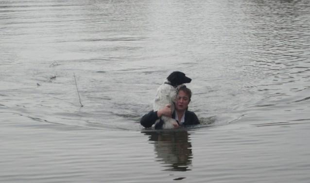 De hond was zo in paniek geraakt dat hij/zij de weg naar de kant niet meer wist te vinden. Foto: Floris Keyzer