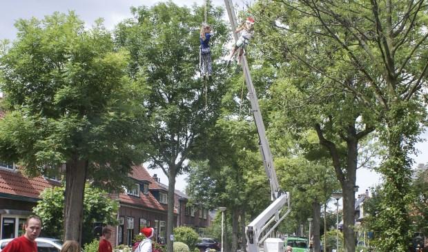 De bomen vormen een onmisbaar deel van het historisch aanzicht en de charme van de Molenstraat, aldus de bewoners. Foto: pr