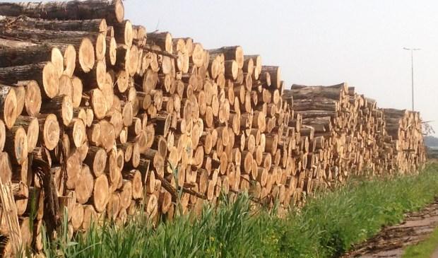 Gekapte bomen in Vlietland (foto: Ton Lassche).