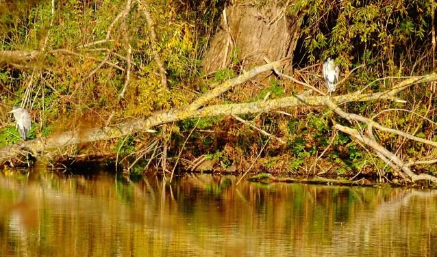 De Plas van Poot als 'natuurkerngebied'. Met onder andere veel Aalscholvers en Blauwe reigers. Tekst en foto: Rob Wiewel