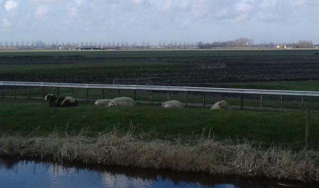 Ochtendrust in de Meerpolder. Na de uitvoering van de maatregelen blijft de polder geschikt voor extensieve recreatie, met oog voor de natuur. Foto: Anneke Otten