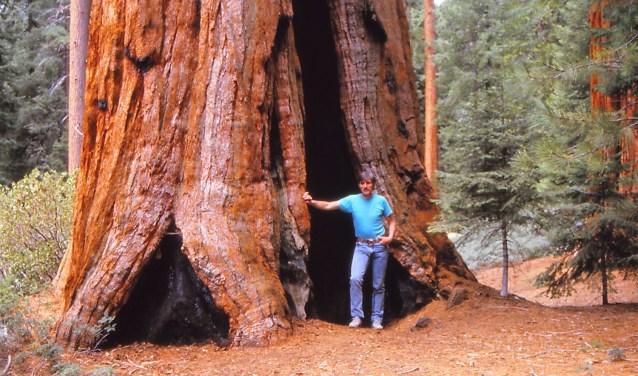 Ook het Yosemite National Park met zijn gigantische Sequoia's komt aan de orde (foto: pr).