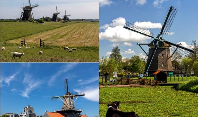 De molens van Leidschendam-Voorburg presenteren zich op een lokale Molendag (foto Charles Groeneveld).