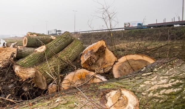 Ondanks de vele gekapte bomen, wil de provincie niet overgaan tot de aanleg van voorzieningen om geluid te weren of het zicht op de rijksweg te ontnemen (archieffoto: Jordy Kortekaas).