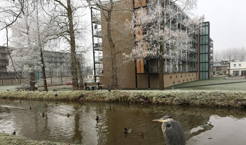 Rondom Wonen gaat van ruim 600 huurwoningen (in totaal 2.500 afrekeningen) laten berekenen hoe veel de huurders te veel betaald hebben aan vastrecht in de jaren 2014 tot en met 2017.