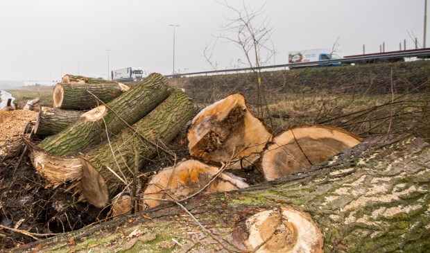 Massaal gekapte bomen in Vlietlanden, Leidschendam (archieffoto: Jordy Kortekaas).