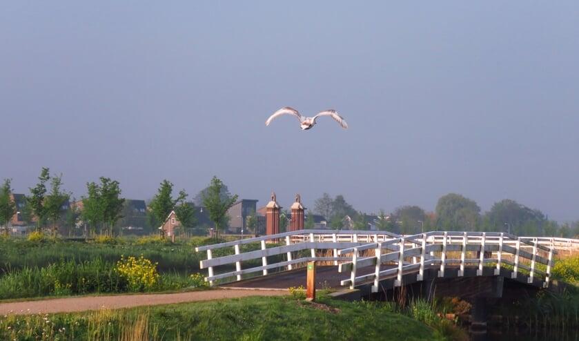 De Groenzoom blijft wat het Burgerpanel betreft de grens met Lansingerland. (foto: Nel Giorgi)