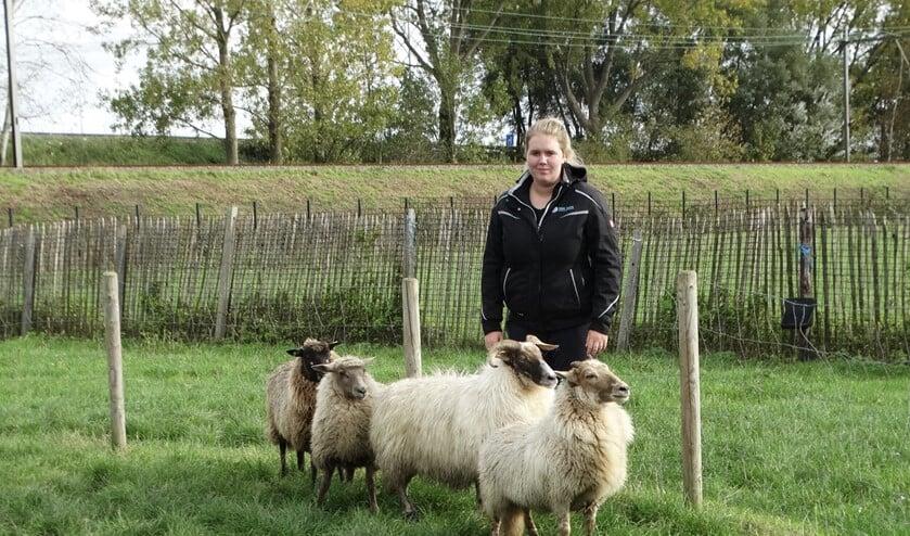 Naast Drentse Heideschapen en Schoonebekers werkt Didi ook met Kempische Heideschapen.