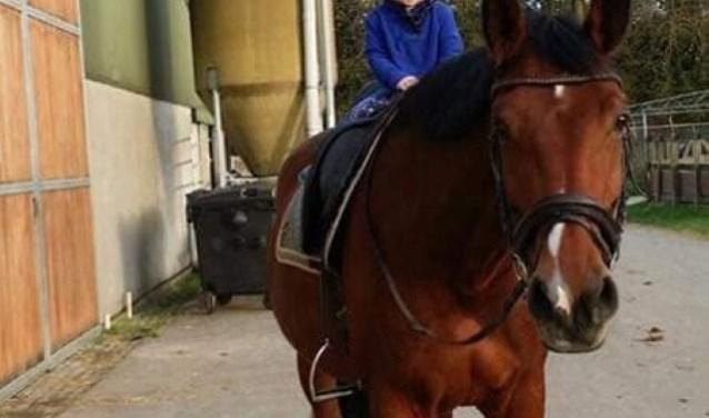 Het paard Bel.