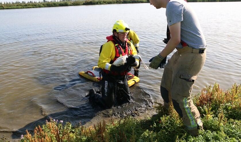 Brandweermannen redden jonge lepelaar in de Groenzoom. (foto: Caroline Elfferich)